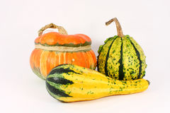Three decorative gourds Royalty Free Stock Photos