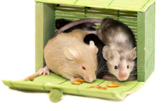 Three decorative mice. Little mice sitting in green casket and looking around Royalty Free Stock Images