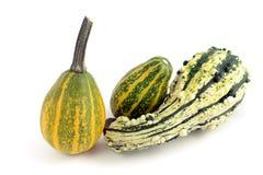Three decorative mini pumpkins Royalty Free Stock Image