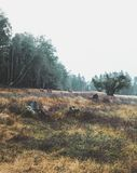 Three Deer on Brown Field Near Forest during Daytime Royalty Free Stock Photos
