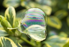 Three delicate soap bubbles stacked upon one another like ideas, Stock Photo