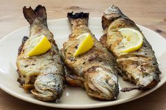 Three delicious grilled trouts. Delicious grilled trout with lemon on the table Royalty Free Stock Photo