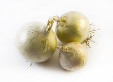 Three detailed white onions in different positions on a white background - composition Stock Photos