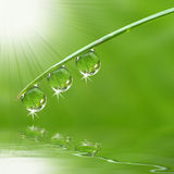 Three dew drops. Fresh grass with dew drops close up Stock Photo