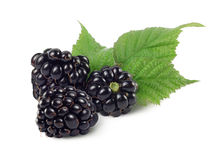 Three dewberries (blackberries) and green leaves. Are on white background.Isolated Royalty Free Stock Images