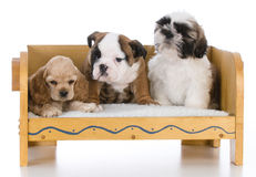 Three different breeds Royalty Free Stock Image