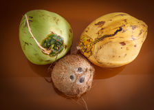 Three different coconuts on table. Horizontal top view Stock Photos