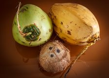 Three different coconuts. On table top view Royalty Free Stock Images
