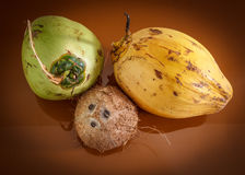 Three different coconuts Stock Photography