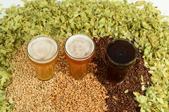 Three different colored beers. Three beers in taster glasses surrounded by various colored grain and hops Royalty Free Stock Images