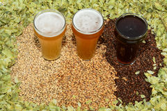 Three different colored beers. Three beers in taster glasses surrounded by various colored grain and hops Stock Photos