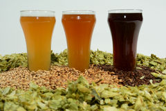 Three different colored beers. Three beers in taster glasses surrounded by various colored grain and hops Stock Photography