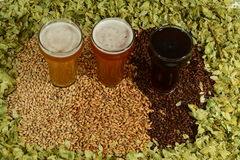 Three different colored beers. Three beers in taster glasses surrounded by various colored grain and hops Royalty Free Stock Photography