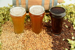 Three different colored beers. Three beers in taster glasses surrounded by various colored grain and hops in front of barrel Stock Image