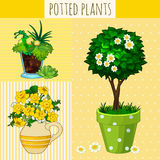 Three different flowers in pots Royalty Free Stock Images