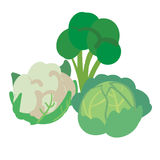 Three different kinds of cabbage isolated on white. Background Royalty Free Illustration