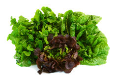Three Different Lettuce Varieties Royalty Free Stock Photography