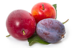 Three different plums Stock Image