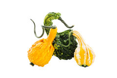 Three different pumpkins isolated over white background Royalty Free Stock Images