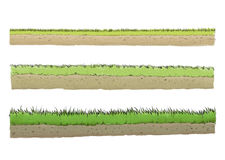 Three different species of grass. Illustration of three different species of grass Royalty Free Stock Photography