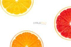 Three different varieties of orange slice Royalty Free Stock Photo