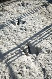 Three dinosaur tracks Stock Photos
