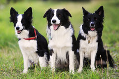 Three dog Stock Images
