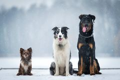 Three dog sitting in the winter park. A snowy day stock photos