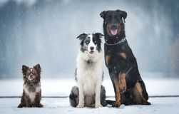 Three dog sitting in the winter park stock images