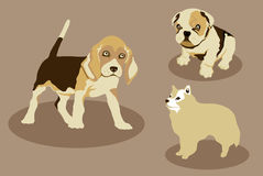 Three dogs Royalty Free Stock Image