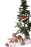Three dogs. Sitting by the christmas tree Royalty Free Stock Photography