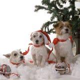 Three dogs stock image