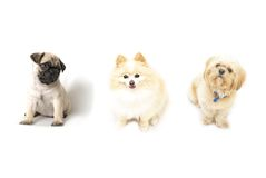 Three Dogs Stock Image