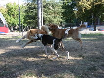 Three dogs game Stock Photography