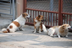 Three dogs in garden Royalty Free Stock Photo