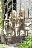 Three dogs locked Royalty Free Stock Photography