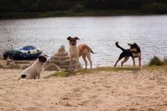 Three dogs near the river Stock Photos