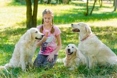 Three dogs and one little girl royalty free stock photo