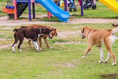 Three dogs playing together royalty free stock images