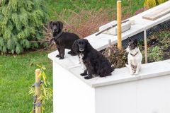 Three dogs sitting on fence royalty free stock photos