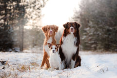 Three dogs sitting together outdoors in the snow stock images