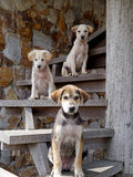 Three dogs on the stairs Royalty Free Stock Photo