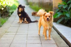 Three dogs went for a walk on the road together royalty free stock photos