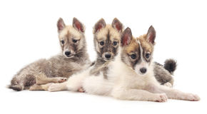 Three dogs. Three dogs on a white background royalty free stock photo