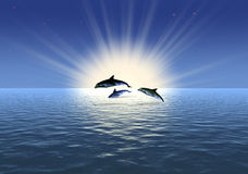 Three dolphin Royalty Free Stock Photography