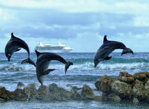 Three Dolphins. Jumping over the ocean Stock Image