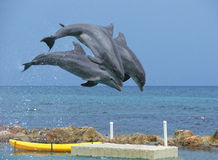 Three Dolphins. Jumping over the ocean Royalty Free Stock Images