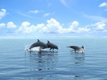 Three dolphins floating at ocean. Stock Photos