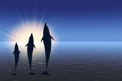 Three dolphins high jumping under water in rays sun. Rise Stock Photography