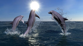 Three dolphins Royalty Free Stock Photography